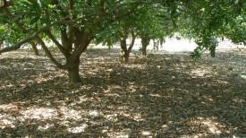 Land for sale – Papparambakkam village